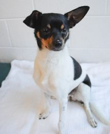 Mickey-  A handsome guy like Mickey, needs his perfect Minnie!   Click on Mickey's picture for more information.