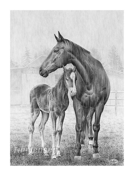 Great artist on etsy horses in the rain black and white custom by timjensenfineart arts in for Disegni di cavalli a matita