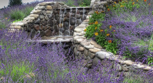Lavender+Farms+Michigan | ... farms lavender farm lavender farms oregon lavender farm lavender farms