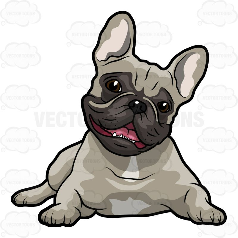 Grey French Bulldog Lying On Its Stomach With Its Head Up And Mouth