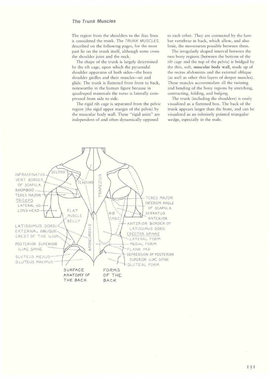 Eliot Goldfinger Human Anatomy For Artists Anatomy For Artists
