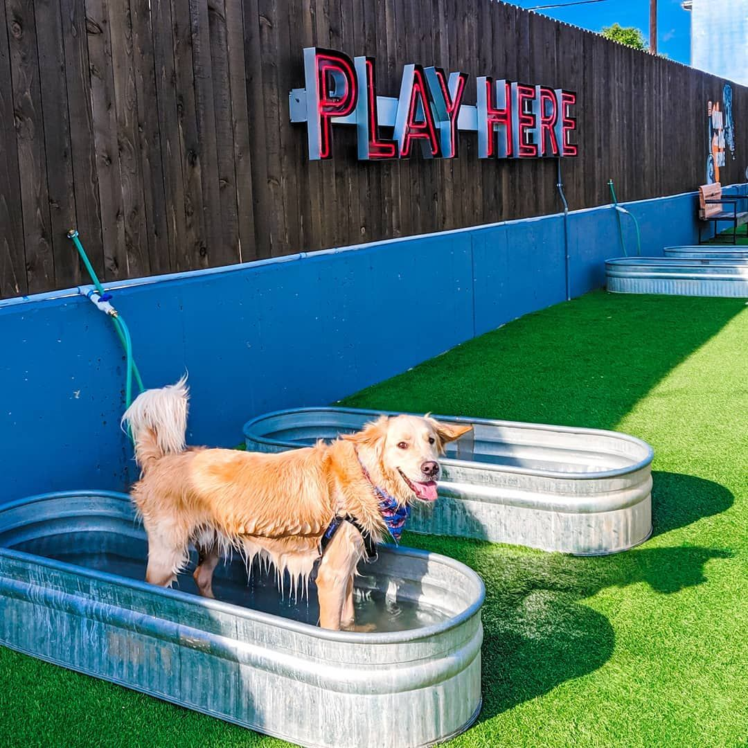 Pin On Dog Park Design