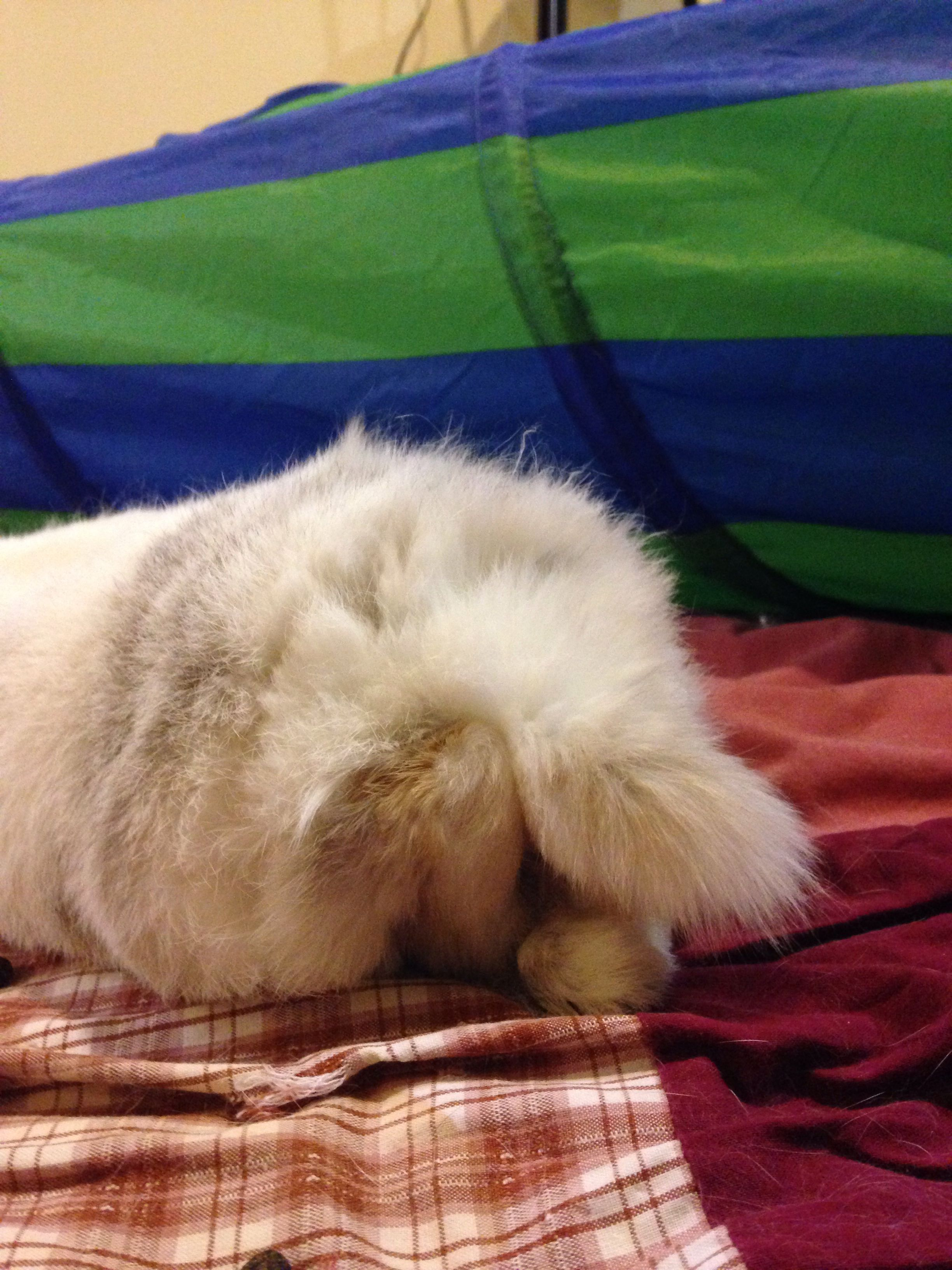 Bunny feet milo u other rabbits pinterest rabbit