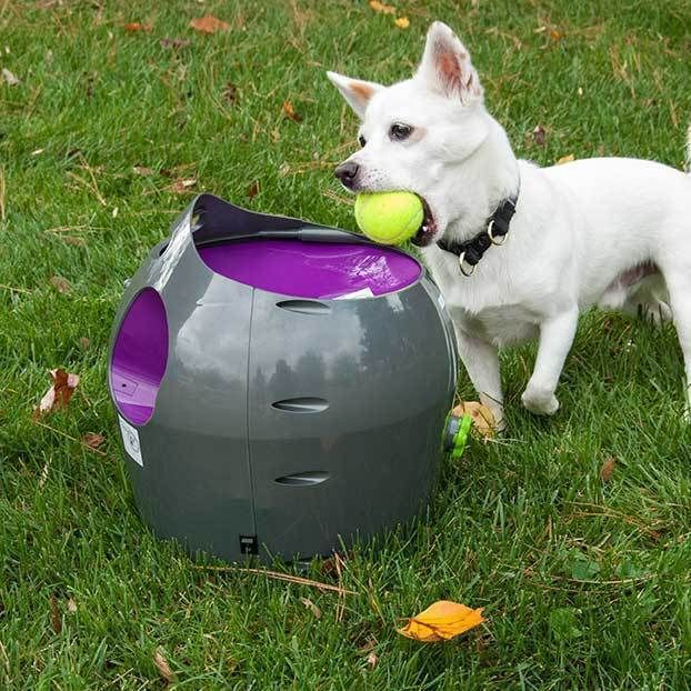 Electric Dog Toy Thrower Wow Blog