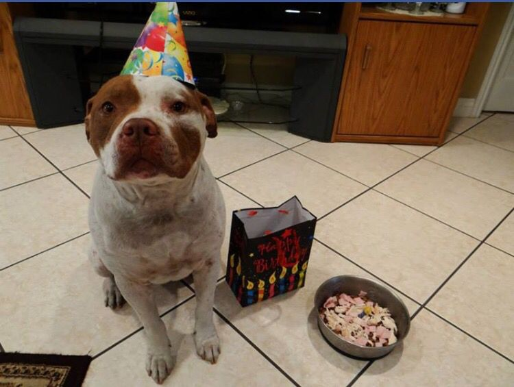 I'm going go miss your mini birthday parties. You will always be my in my heart. I've gotten so attached to you in the last 8 years. That I feel like never again do I want to have a dog. I will always celebrate feb22nd for you. Your birthday. I love you FOREVER DODGER