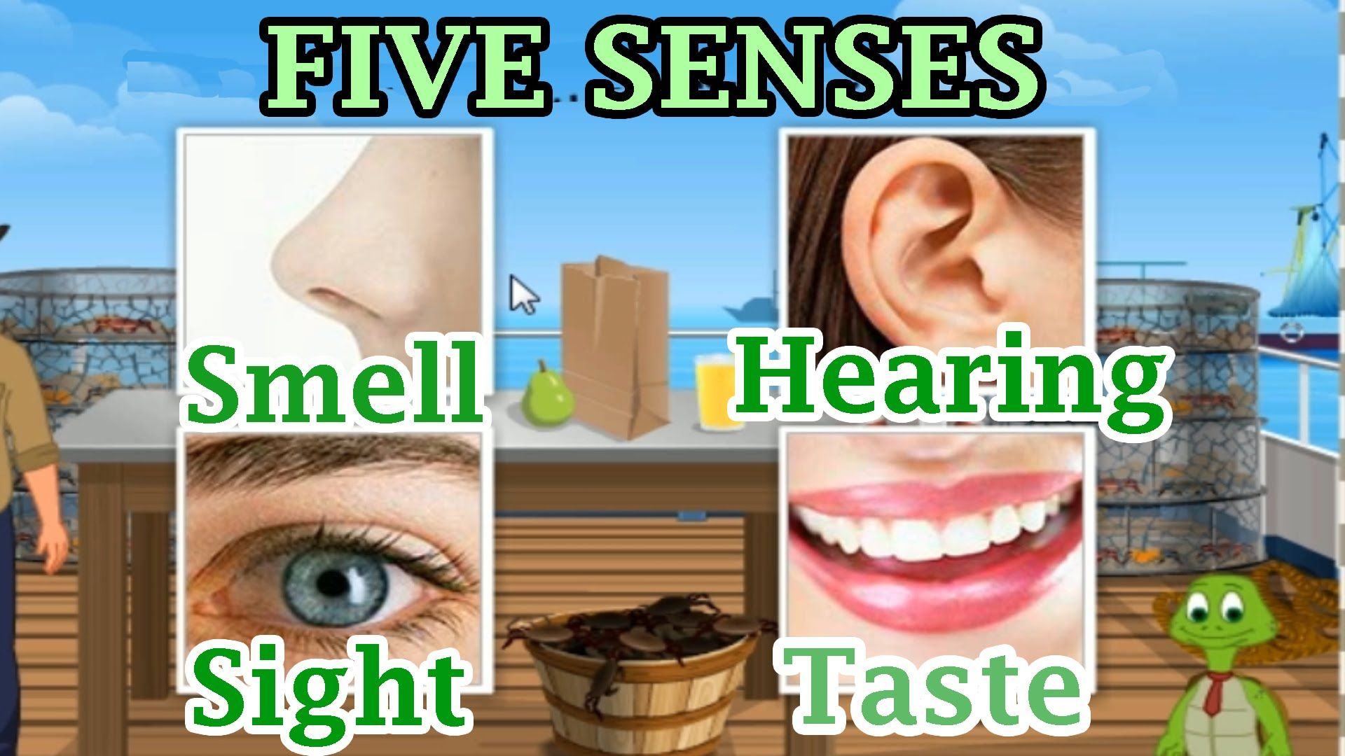 The 5 Senses Sight Hearing Taste Smell And Touch Preschool And Kind