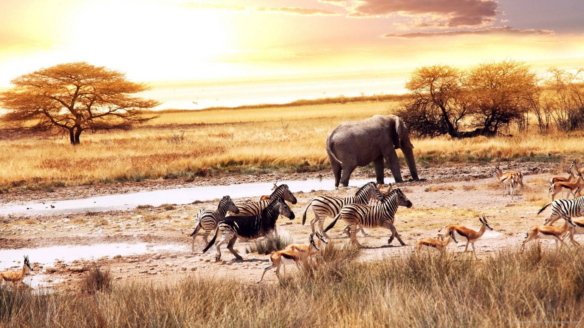 African Savanna - Desktop Wallpaper | Elefantes, Animales, Sabana ...