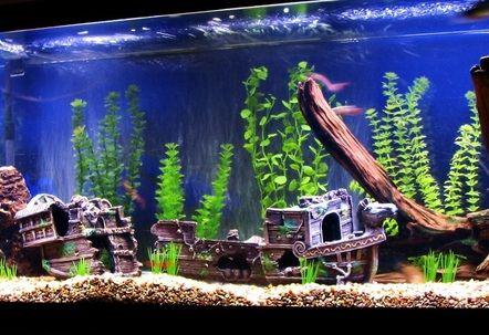 Sunken Ship Fish Tank Themes Aquarium Fish Tank Fish Tank