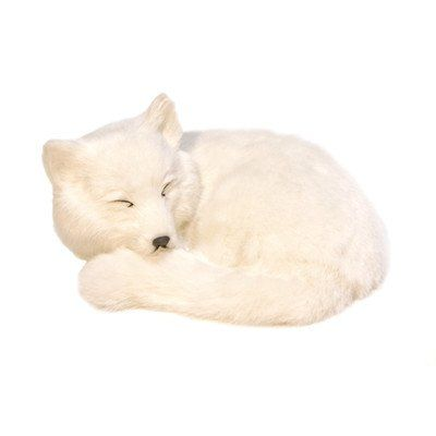 Arctic Fox Soft Toy