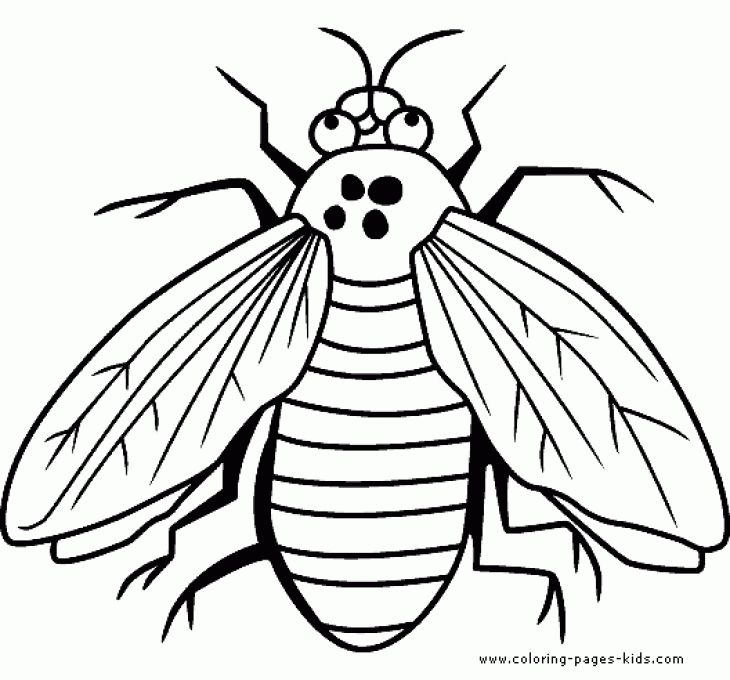 fly is a bug coloring sheet free printable  animal