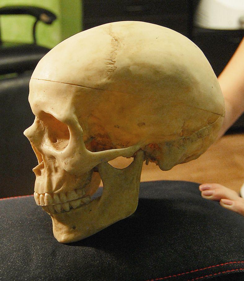 Skull #norbert_hlsz | Anatomy | Pinterest | Anatomía, La calaca y ...