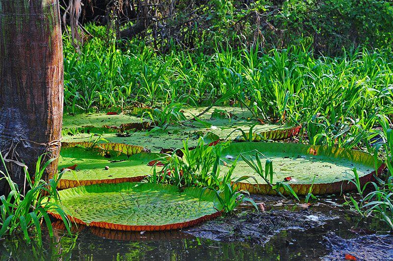 Amazon Rainforest Natureflip Amazon Rainforest Rainforest