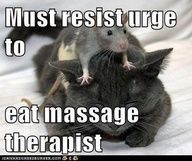 Be Kind To Your Massage Therapist Come To Fulcher S Therapeutic Massage In Imlay City Mi And Lapeer Mi For A Animals Friendship Cute Animals Animals Friends