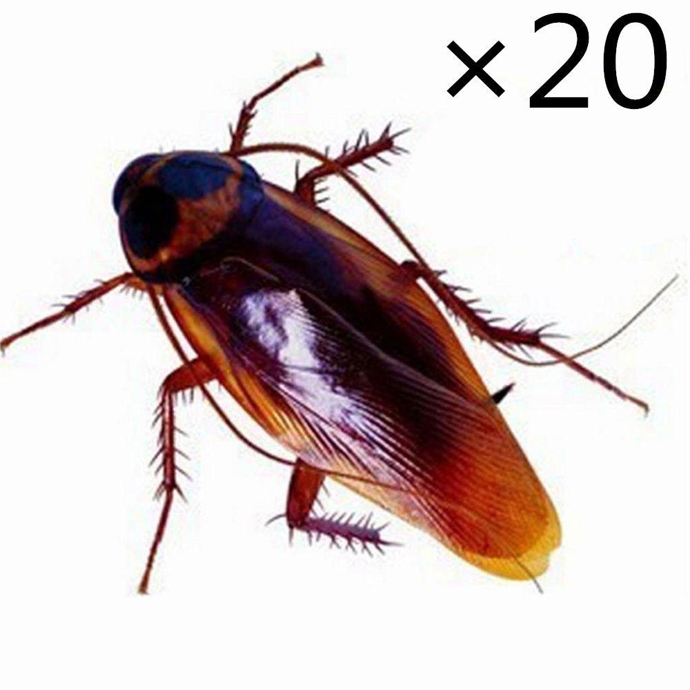 Details about 20 pcs Lifelike Plastic Roach Blackbeetle