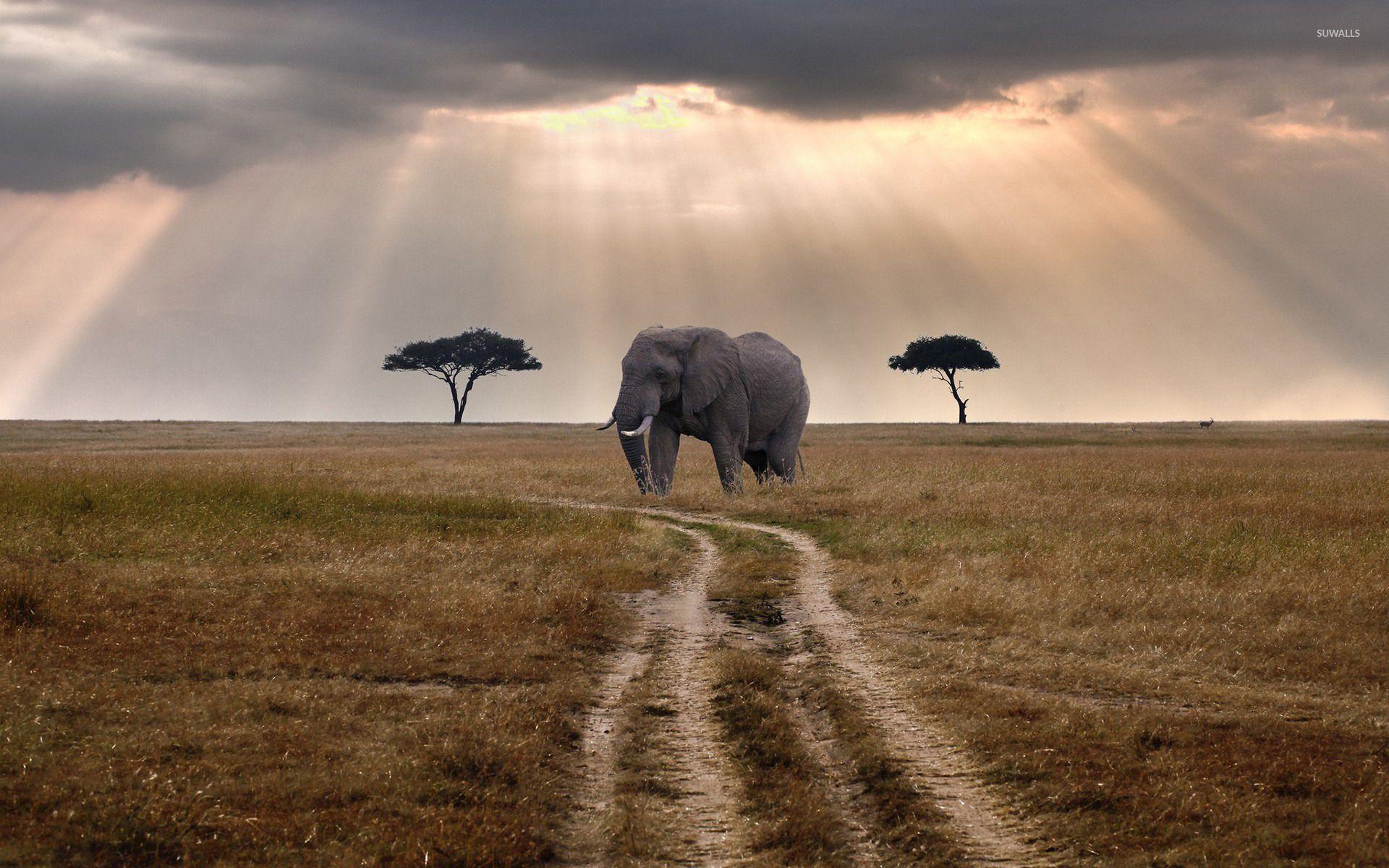 Hd wallpaper elephant - Elephant Wallpapers Wallpaper