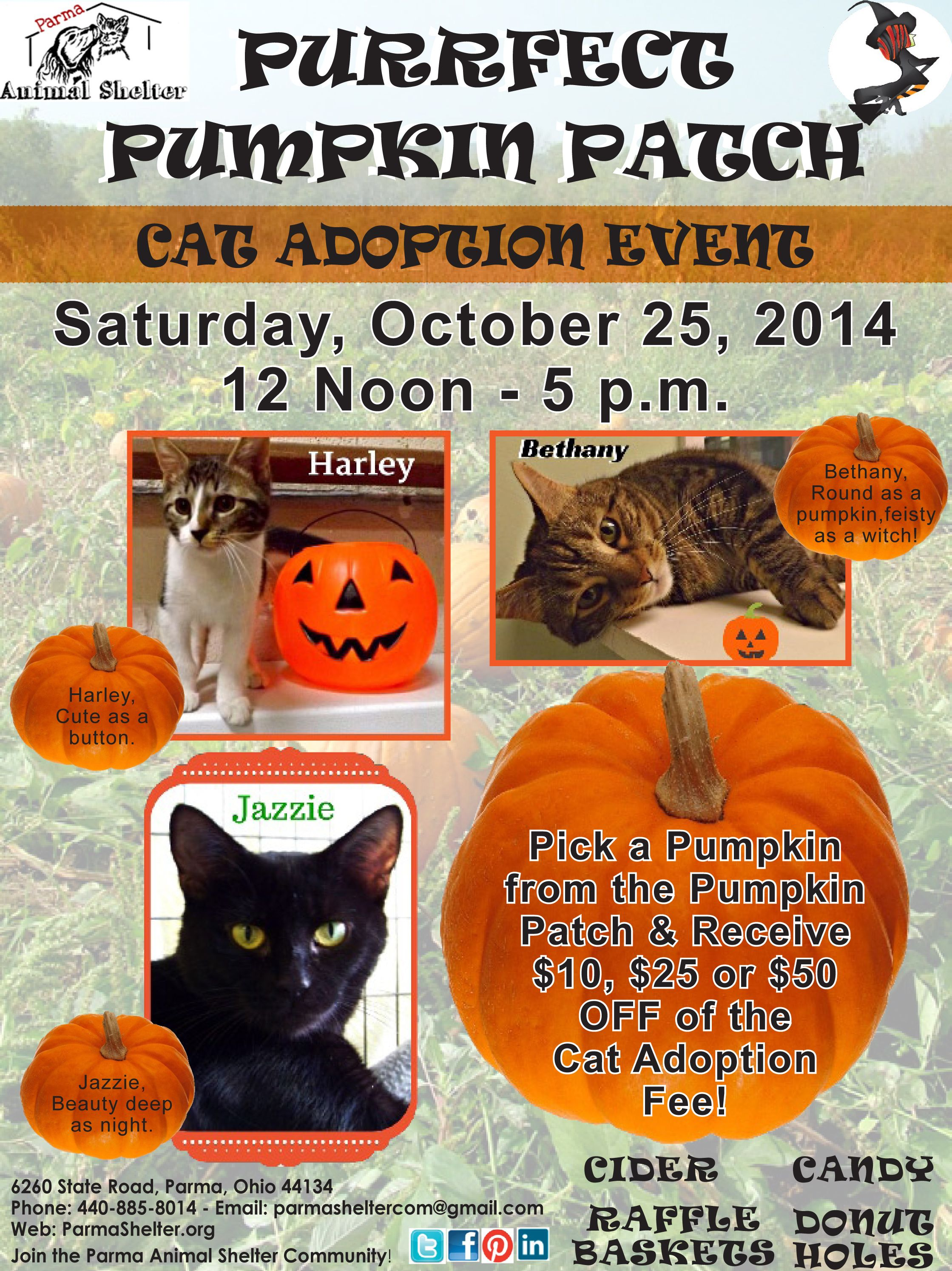 Purrfect Pumpkin Patch Cat Adoption Event At The Parma Animal Shelter On Saturday October 25 2014 Pick Cat