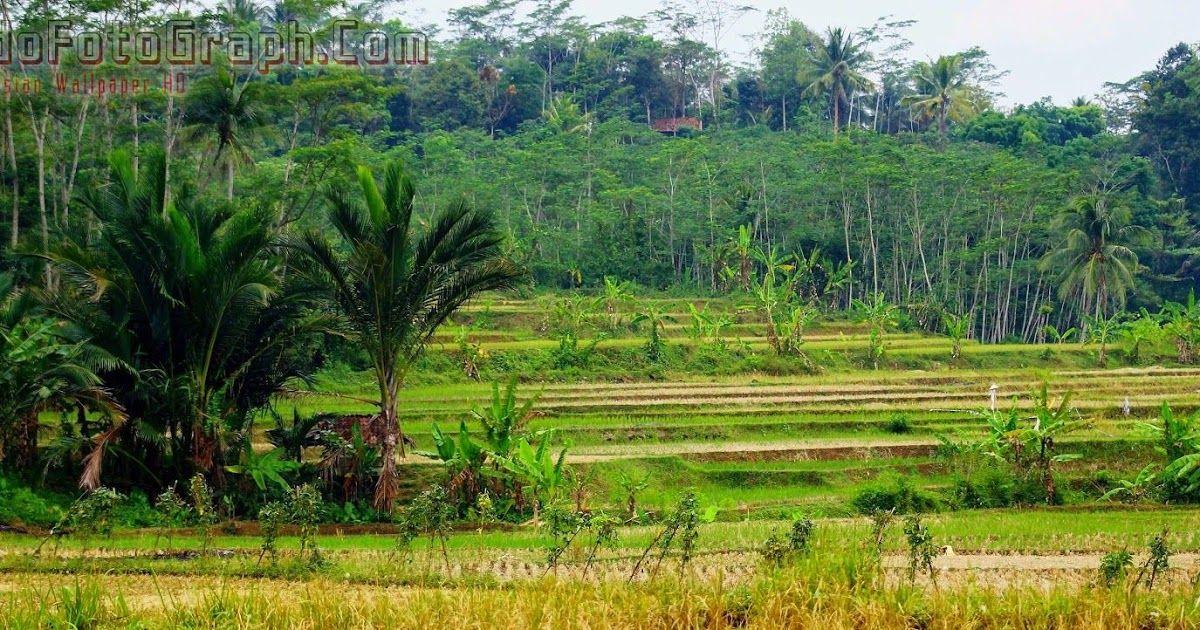 Terpopuler 30 Background Pemandangan Keren Download Wallpaper Pemandangan Alam Indonesia Download Wallpaper Keren Pem Di 2020 Pemandangan Fotografi Alam Foto Alam