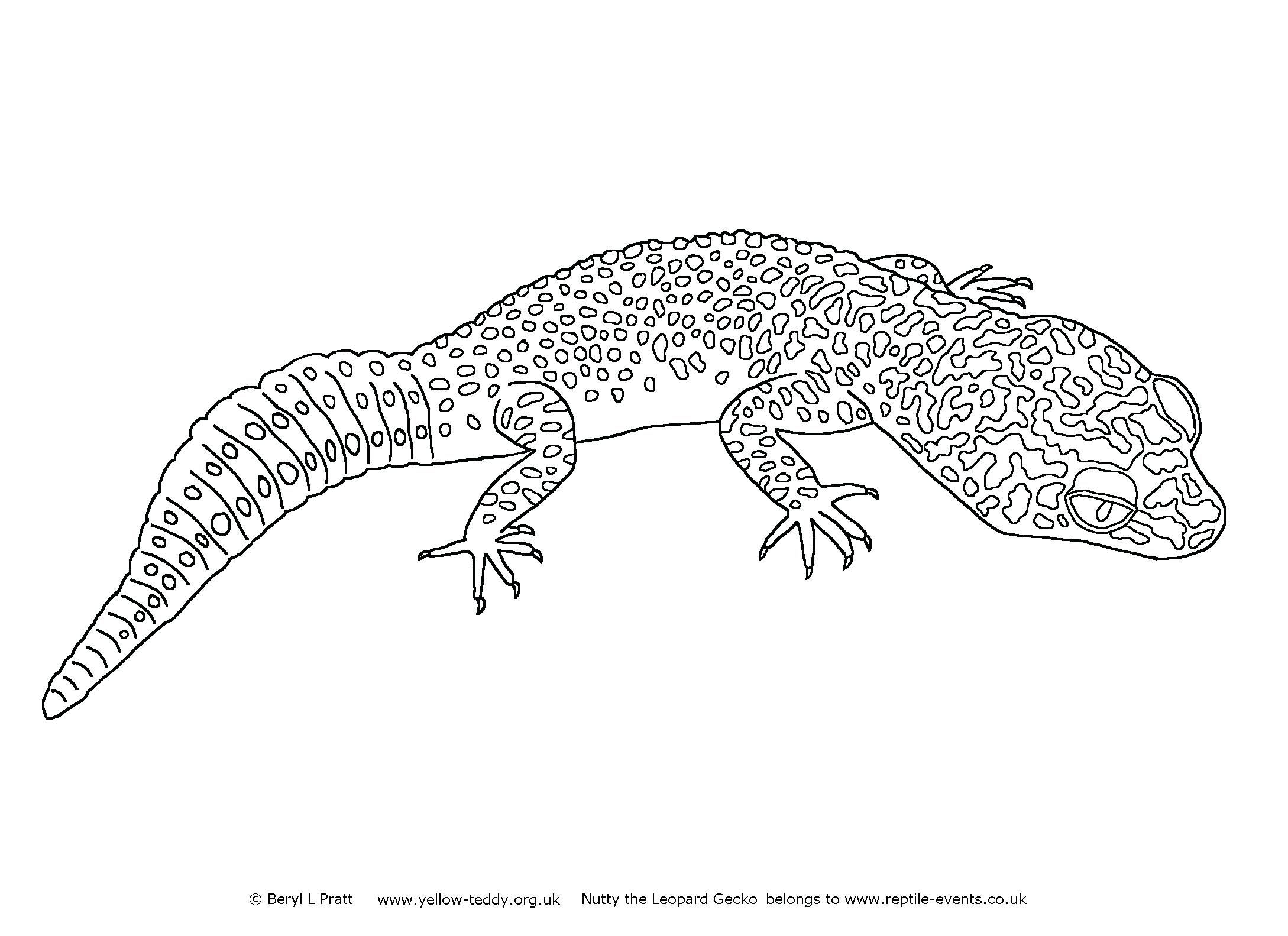 Leopard Gecko Coloring Pages Collection Coloring Pages Leopard Gecko Cute Gecko