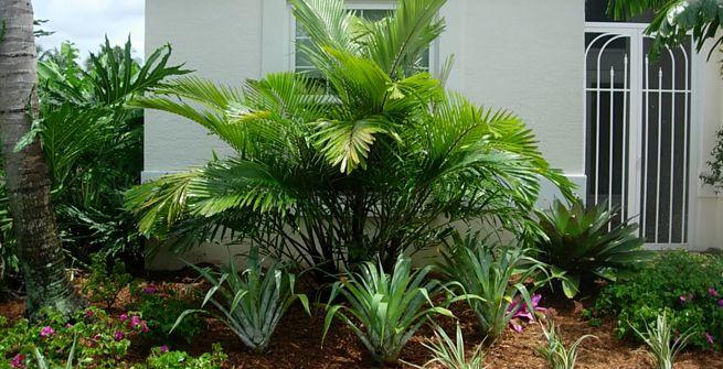 Las mejores palmeras para decorar tu jard n o terraza for Palmeras de exterior