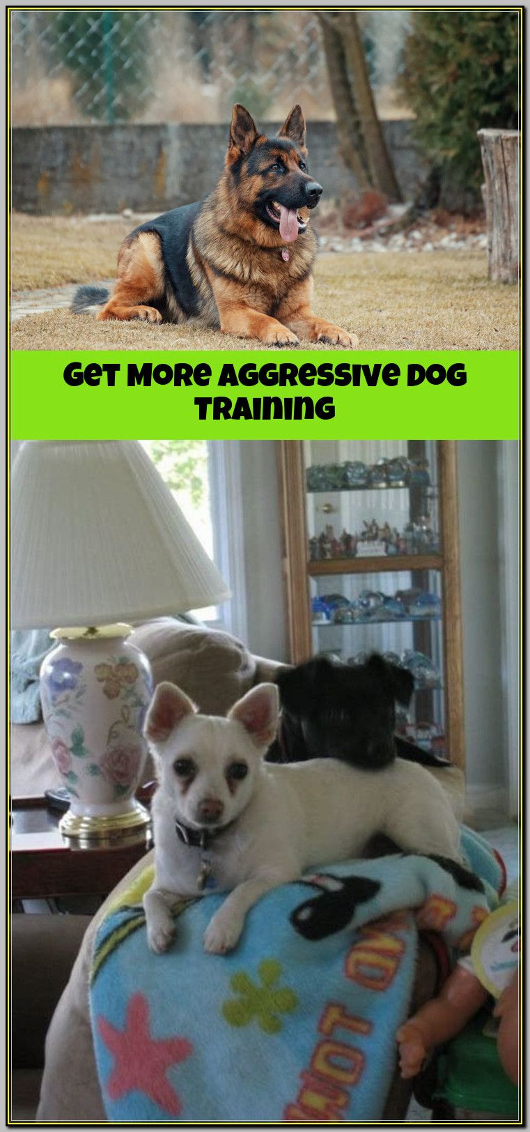 Make Aggressive Training Sessions Fun For Your Dog And You