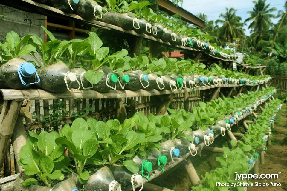 Recycling platic bottles urban garden pinterest vegetable garden and gardens - Recycled containers for gardening ...