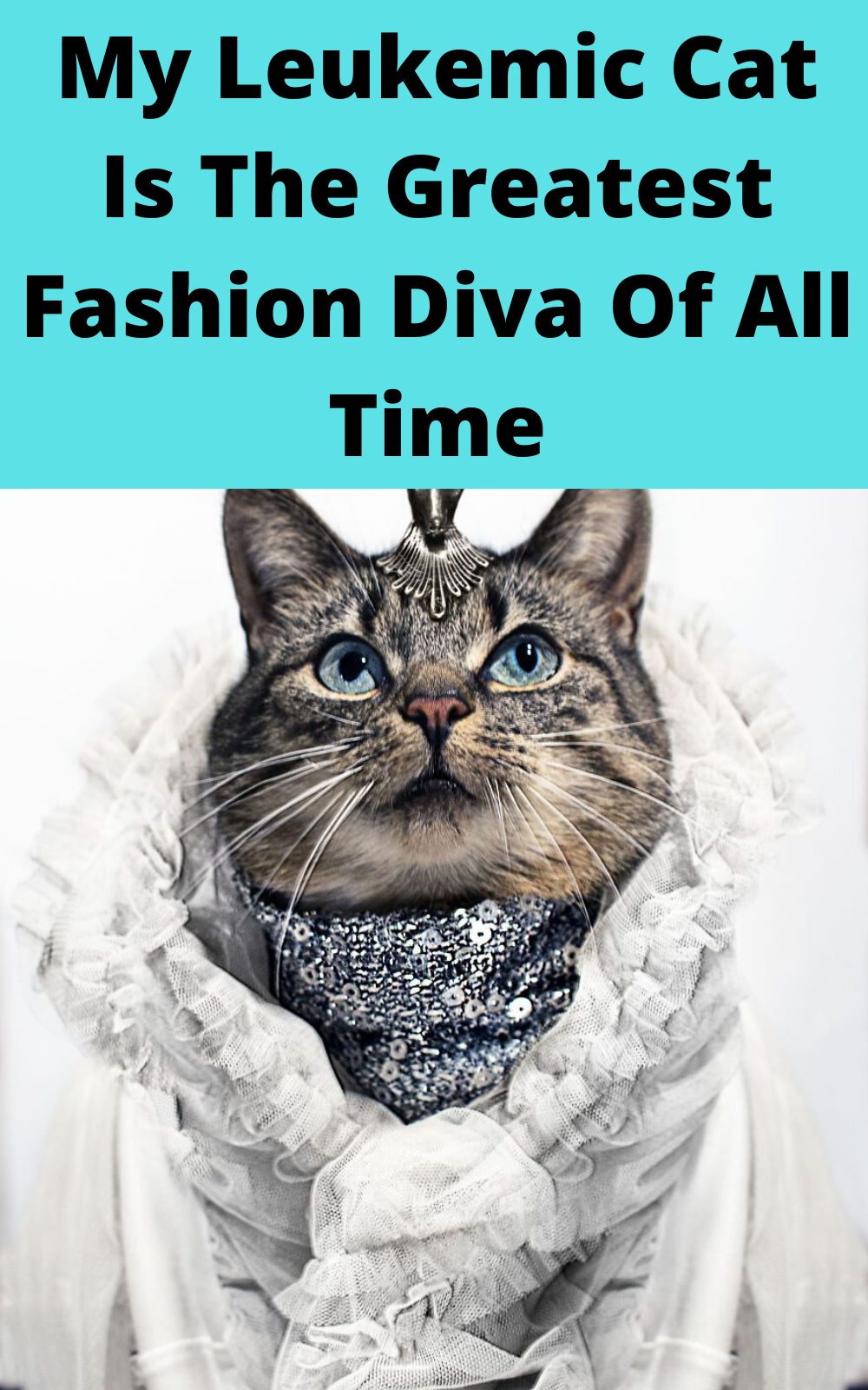 My Leukemic Cat Is The Greatest Fashion Diva Of All Time