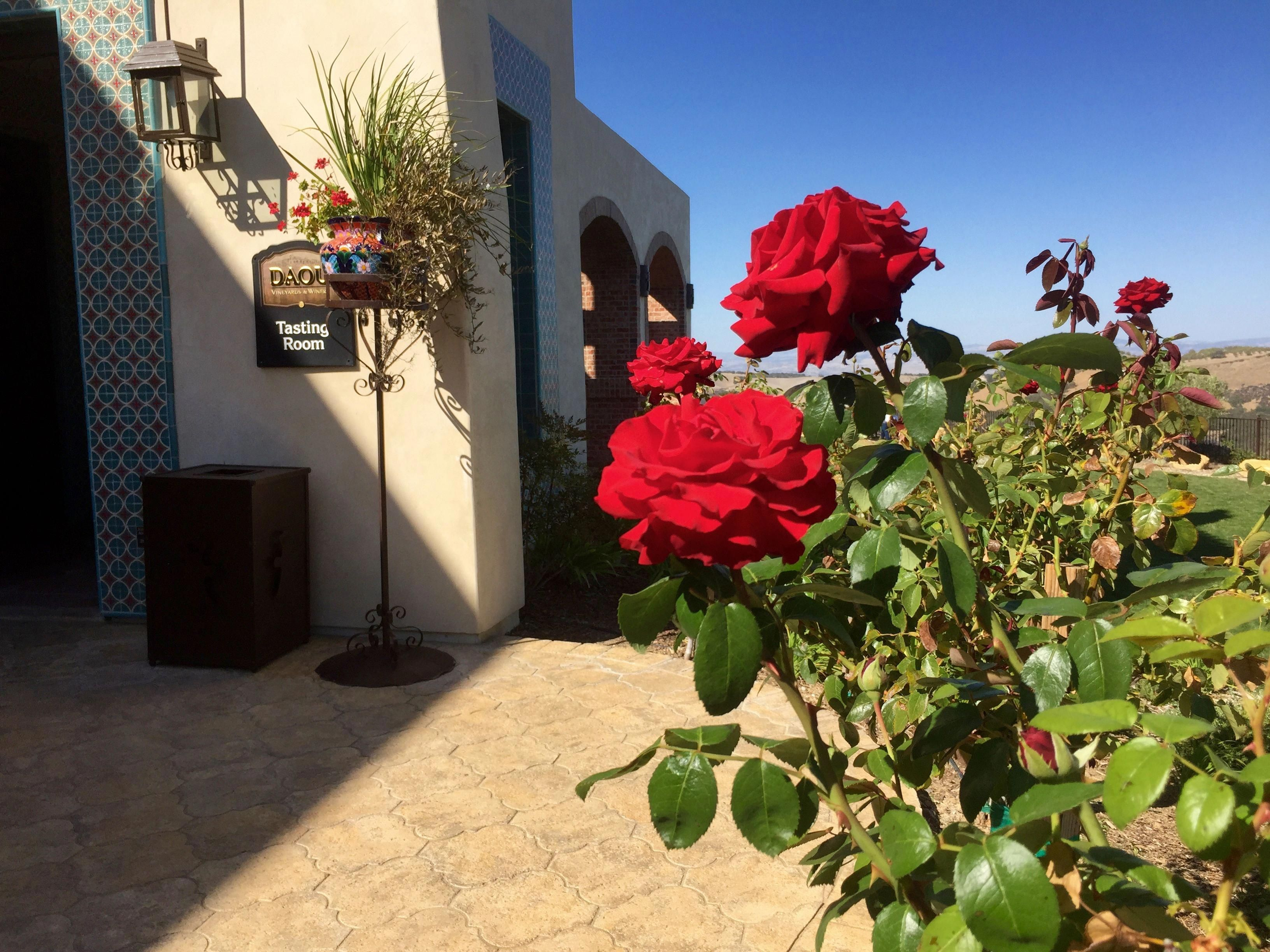 Daou Vineyards In Paso Robles California Pasorobleswineries Paso Robles Paso Robles Wineries California Adventure