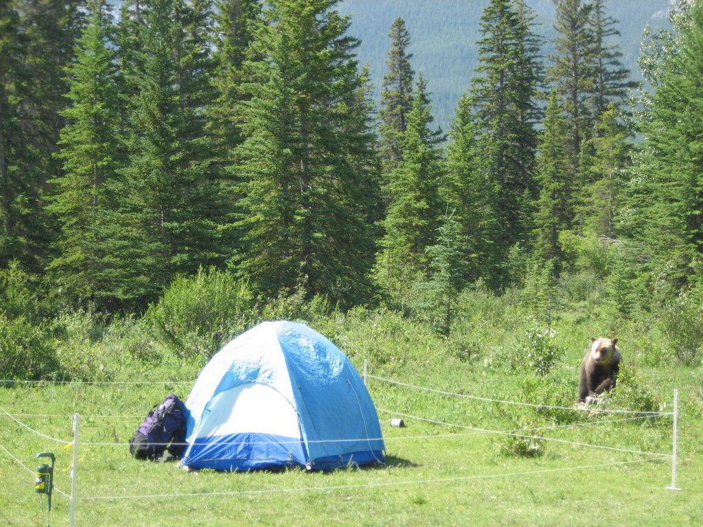 Kodiak Bear Stop Electric Fence Electric Fence Kodiak Bear