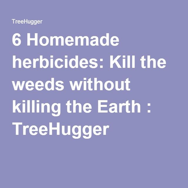 6 Homemade herbicides: Kill the weeds without killing the Earth : TreeHugger