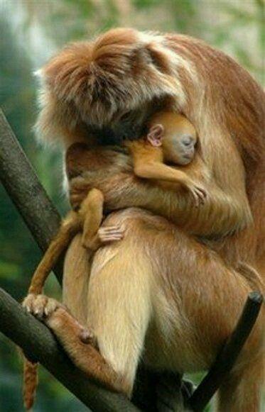 Monkeys love...