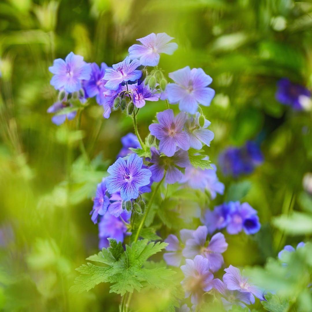 @tomlejardinier Jardin jardinage gazon fleur fruit # ...
