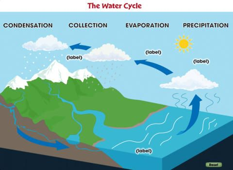 The water cycle by classroom complete press ltd the water cycle the water cycle by classroom complete press ltd ccuart Images