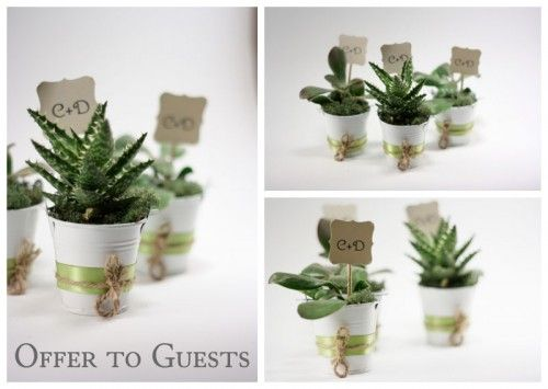 Diy Succulent Wedding Favors In Six Easy Steps Succulent Wedding Favors Succulent Wedding Wedding Gift Favors