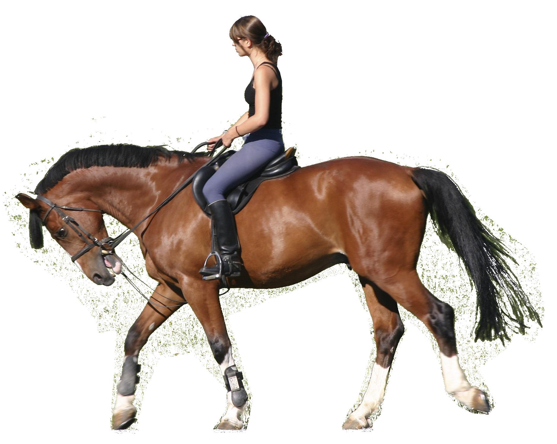 horseback.png (1880×1500) | Mac | Pinterest