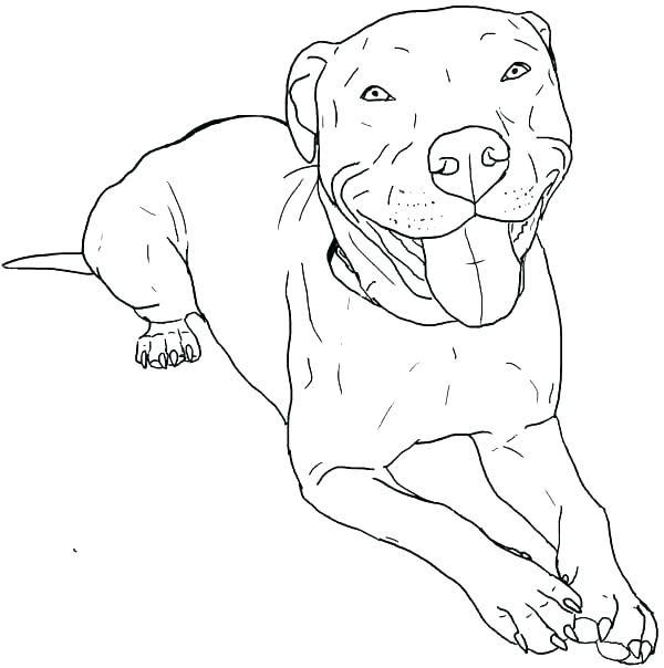 Pitbull Coloring Pages   Dog coloring page, Pitbull ...