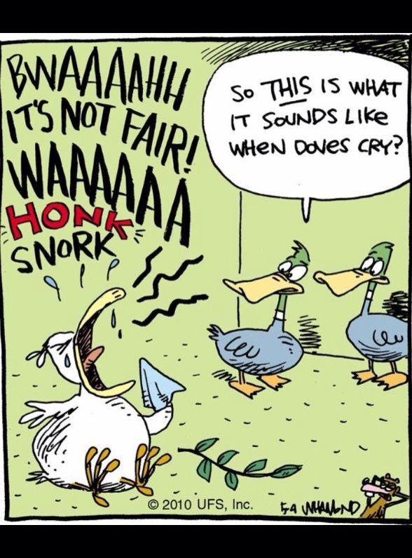 When Dove Cry Music Pun Humor Paraphrase Funny
