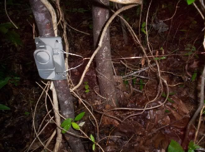 Simple DIY perimeter alarm with tripwire (for outdoors) Walmart has a package of multiples like these