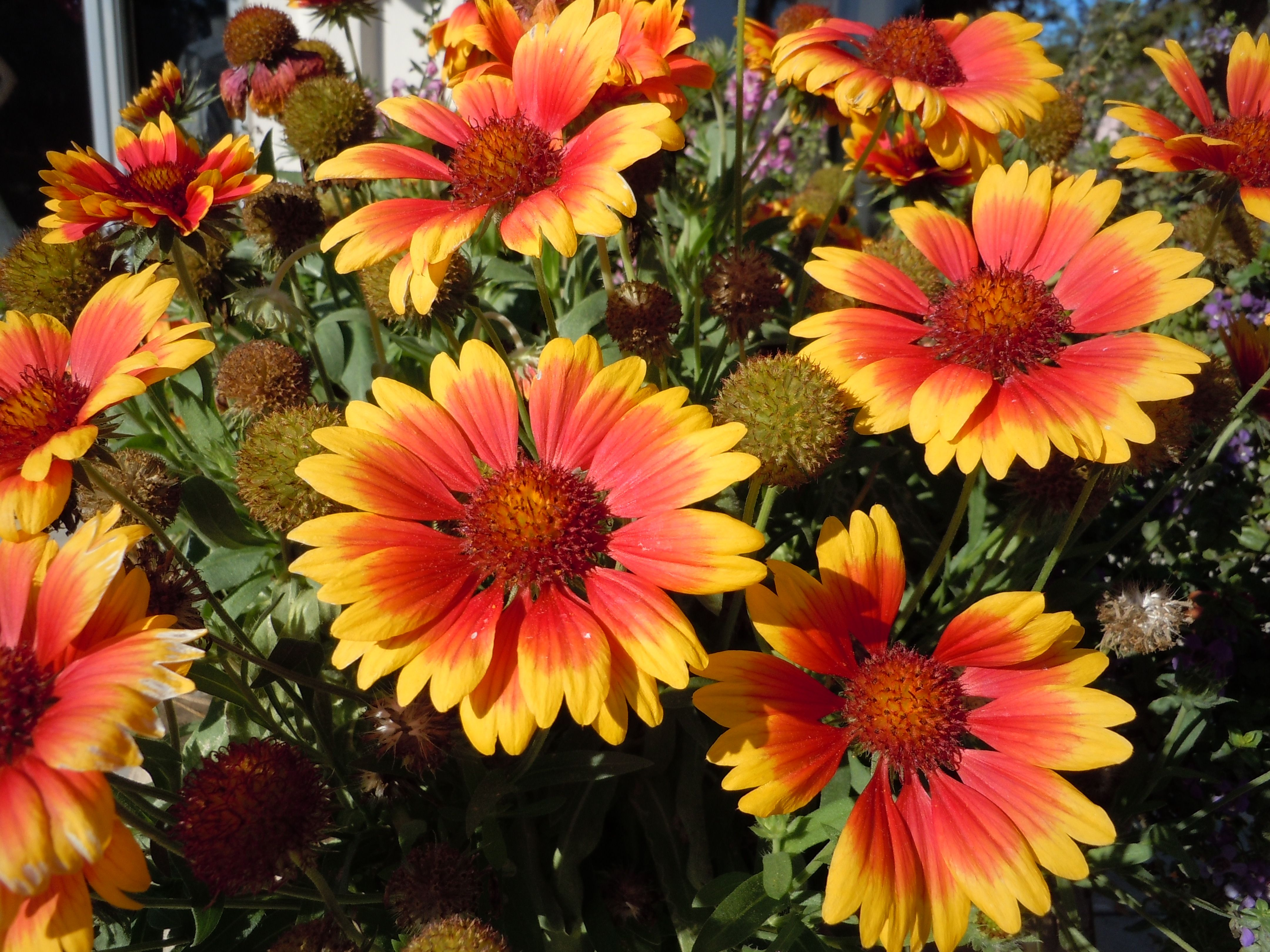 So LUVed the intensity of these orange and gold flowers I caught along Park Avenue, Winter Park, Florida.  This is what my idea of winter looks like and THAT is something I truly LUV! :-)