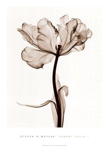 Parrot Tulips Steven N. Meyers