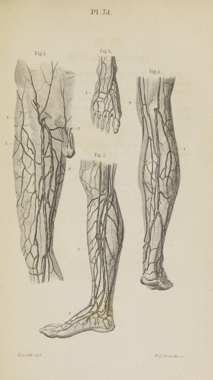 Niedlich Ratte Anatomieatlas Fotos - Anatomie Von Menschlichen ...
