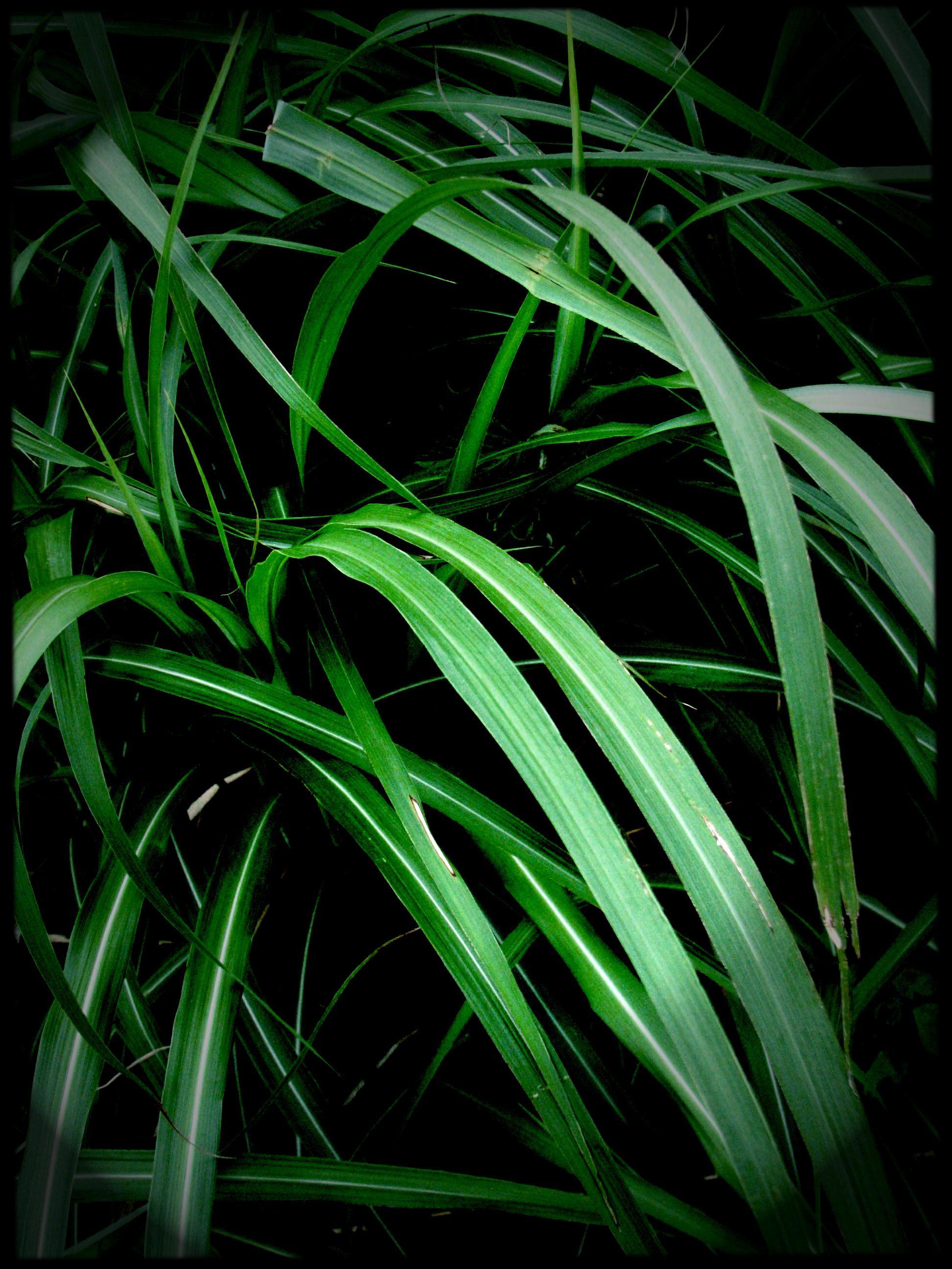 Plant_03 / Manabu Okazaki