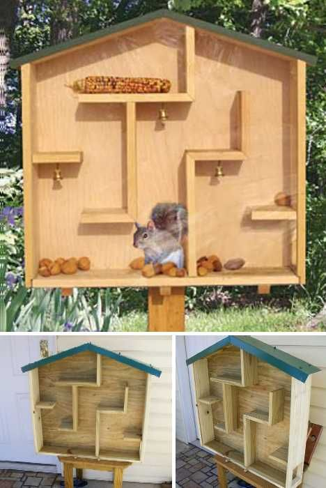 Squirrel Feeder on Pinterest | Bird House Plans, Bird Feeders and ...