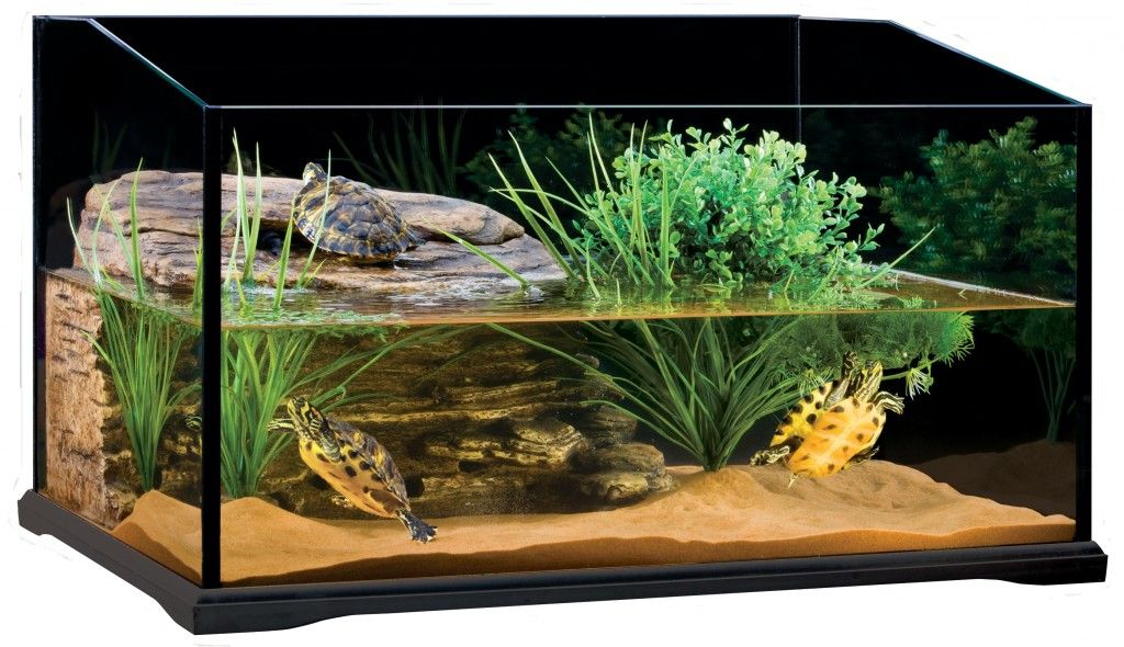 Turtle Tank For The Well Being Of Your Turtles Info Turtle Turtle Terrarium Turtle Aquarium Pet Turtle