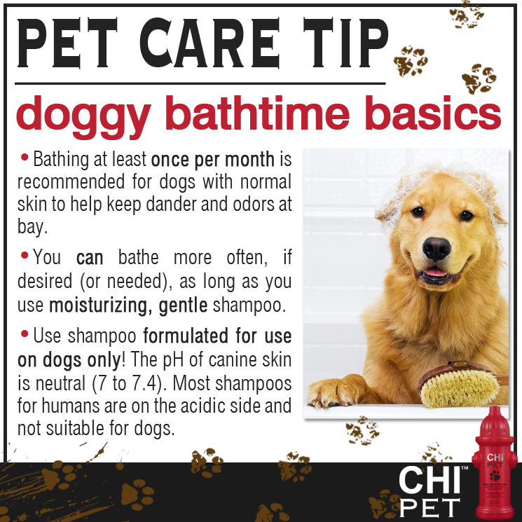 Pin By Mcas Pets On Dog Tips Dog Care Therapy Dogs Therapy Dog Training