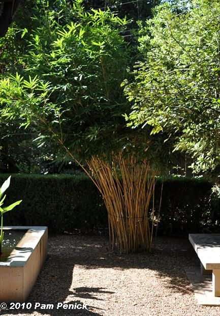 Bamboo in Gravel is a nice touch. Not usually a focal point.