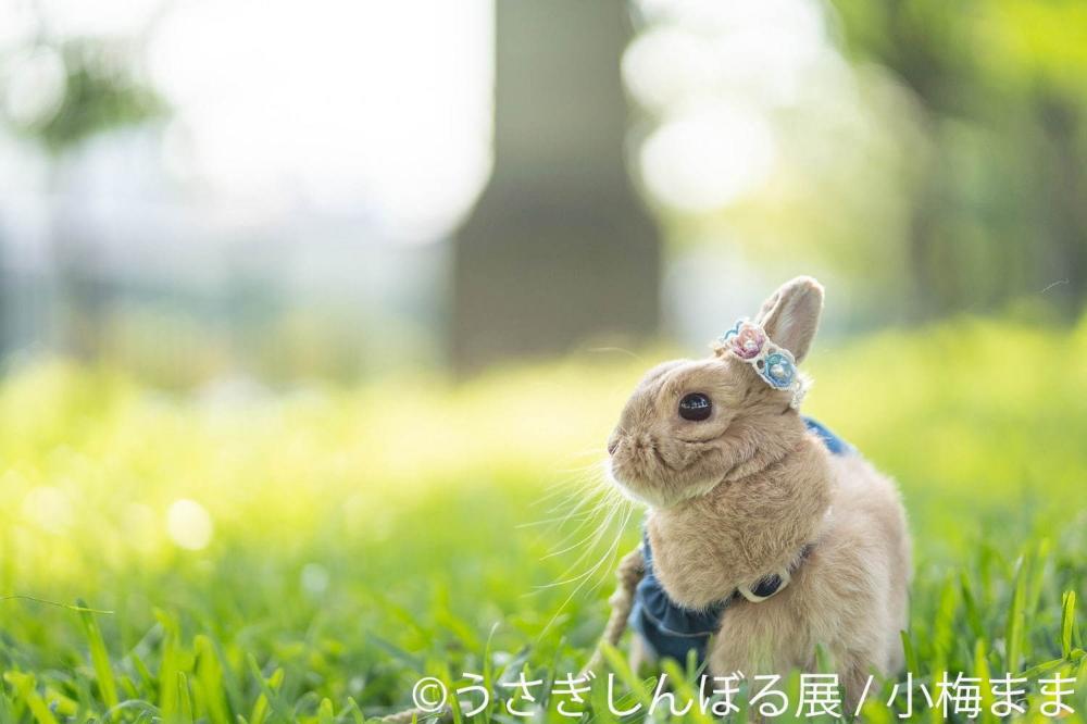 写真2 19 うさぎの合同写真展 うさぎしんぼる展 広島 静岡で ミニチュア作品などグッズ販売も 写真展 うさぎ 写真