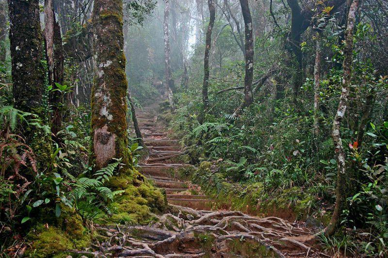Kinabalu National Park National Parks Forest World