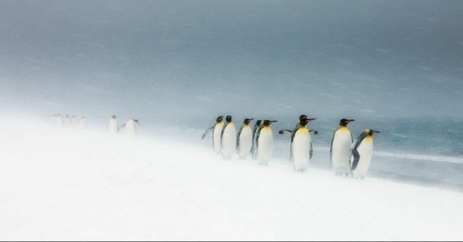 Concurso de fotografia de animais selvagens - BBC - UOL Notícias