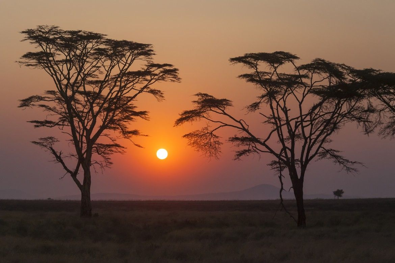 Serengeti Sunset 세렝게티 일몰
