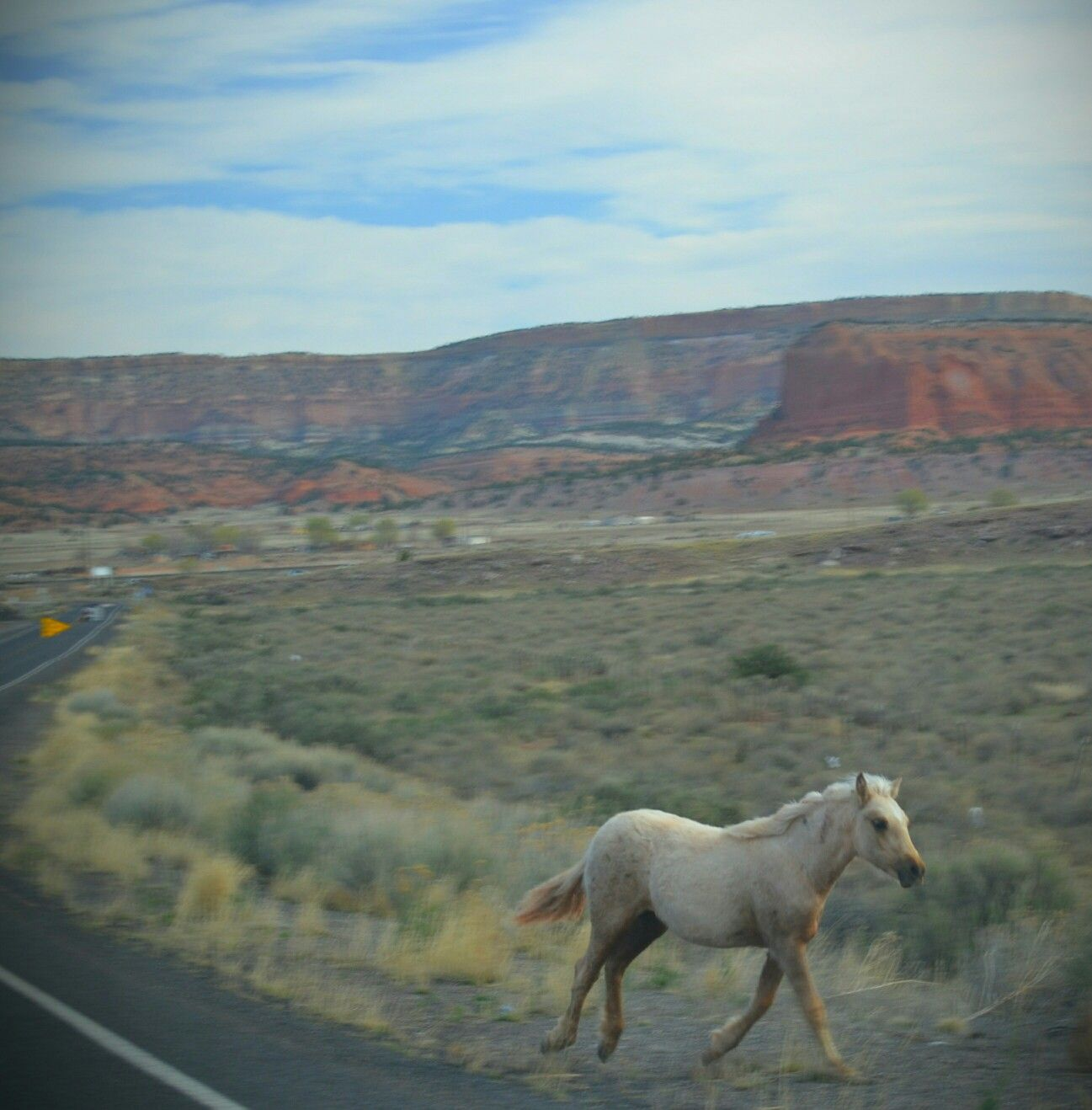 Running Wild On New Mexico